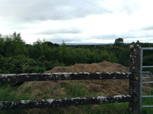 Fence looking over Rosecommon